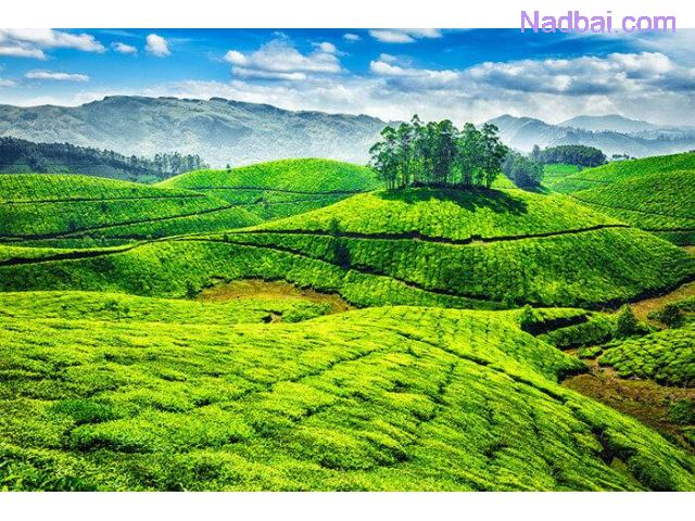 Book Munnar Tour Packages At Best Price