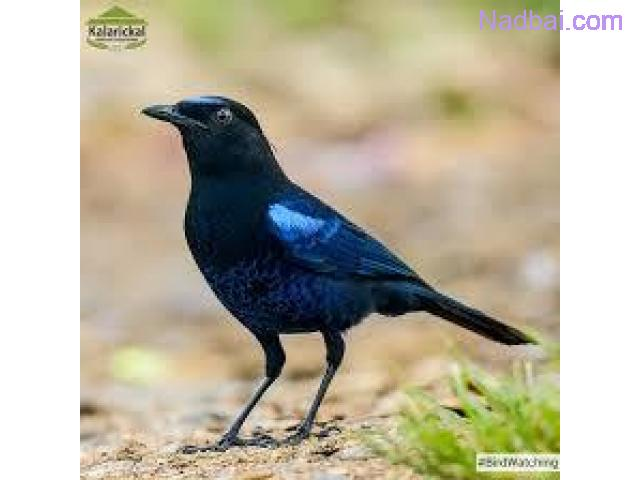 Best Bird watching in Thekkady Kerala