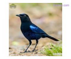 Best Bird watching in Thekkady Kerala